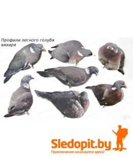 Профиля лесного голубя вяхиря ART комплект 10 штук