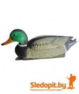 Чучело селезня кряквы Birdland